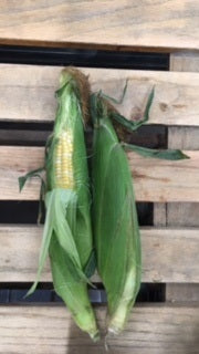 Bi-Color Corn (6) Ct