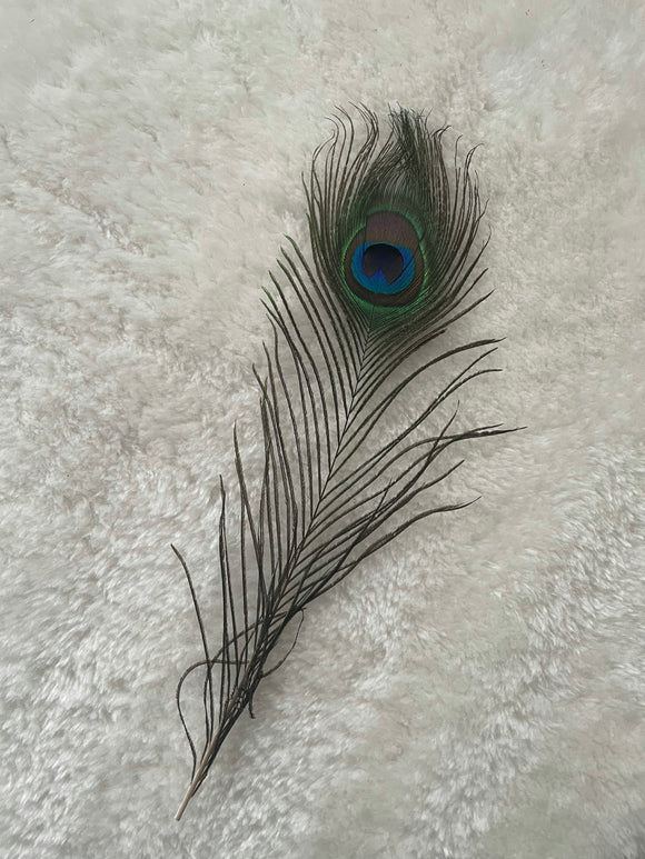 Large Sensory Peacock Feather - 1 piece