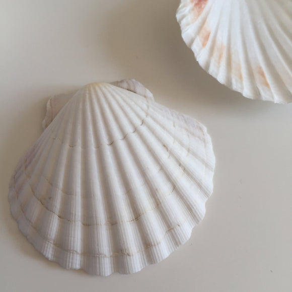 Natural large shells