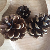 Natural Pine cone - 1 piece