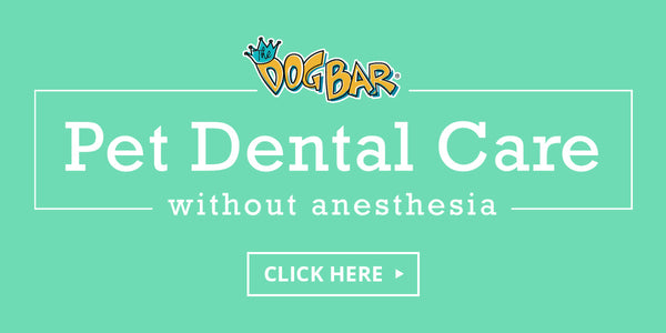 Dental Cleaning Without Anesthesia