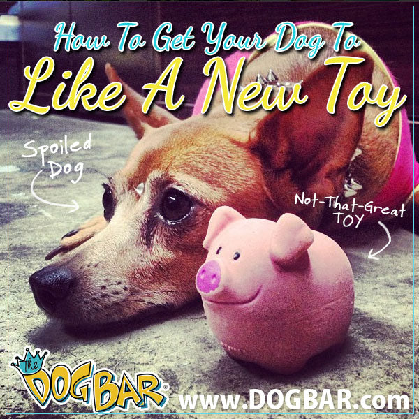 Getting A Dog To Like A Toy
