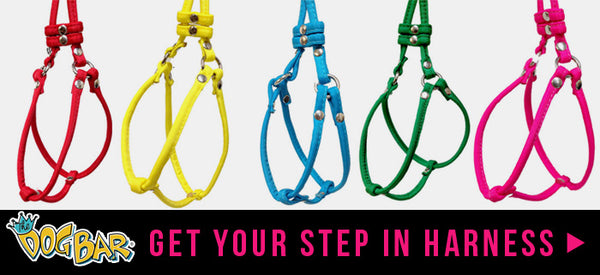 Step In Harnesses