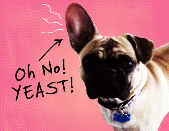 canine yeast infections