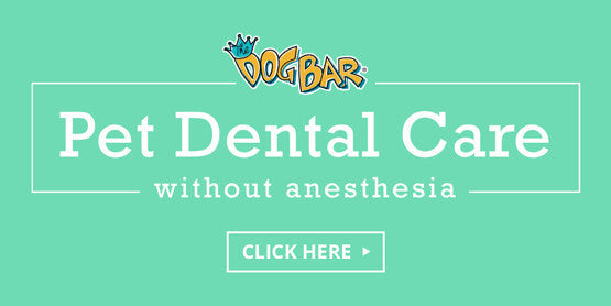 Miami Pet Dental Care Without Anesthesia