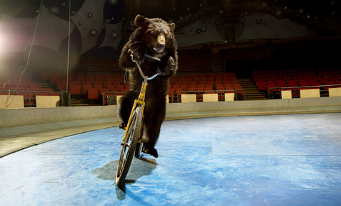 Bear One on Bike