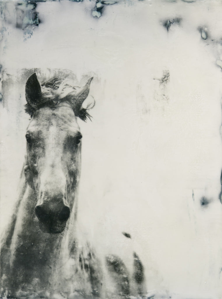 Kandy Lozano: The White Horse 2