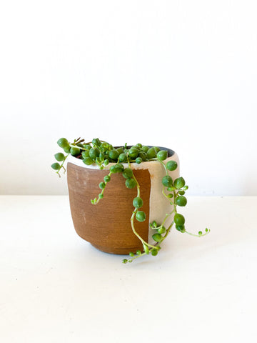 Senecio rowleyanus - string of pearls 3,25""