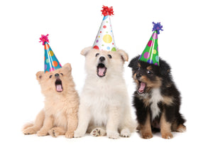 Party Hats Pups Funny Birthday Card