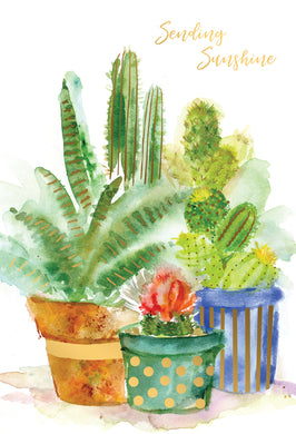Cactus Trio Thinking Of You Card