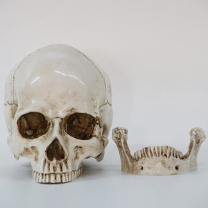 Skull Decorative - Market Glad ™