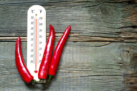 Hot red peppers next to a temperature thermometer