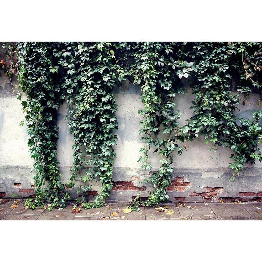 Green Leaves on White Broken Brick Wall Backdrop for Photo Photography