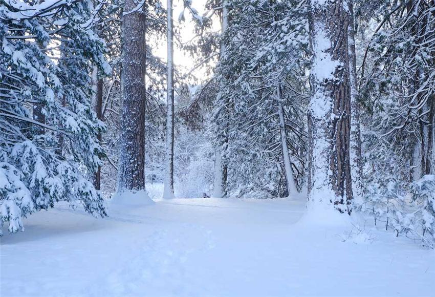 Snow Forest Winter Photo Backdrop for Christmas