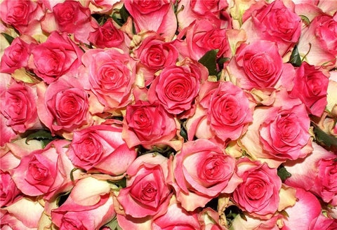 Rose Flowers Backdrops for Photography Prop