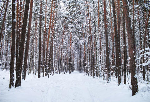 Winter Forest Nature Photography Backdrops