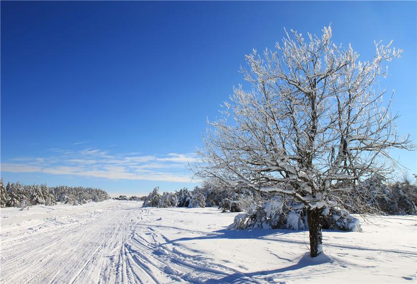 Winter Photo Studio Backdrop Blue Sky Snow Background