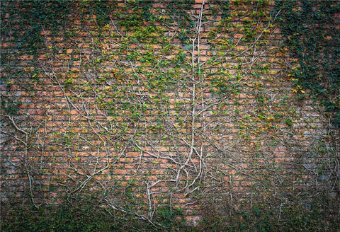Brick Wall Spring Leaves Photography Backdrops for Studio