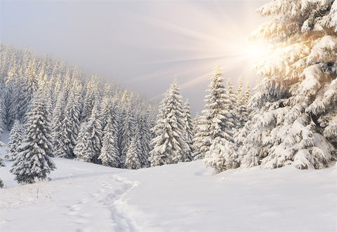 Snow cover Forest Photography Backdrop Winter Background