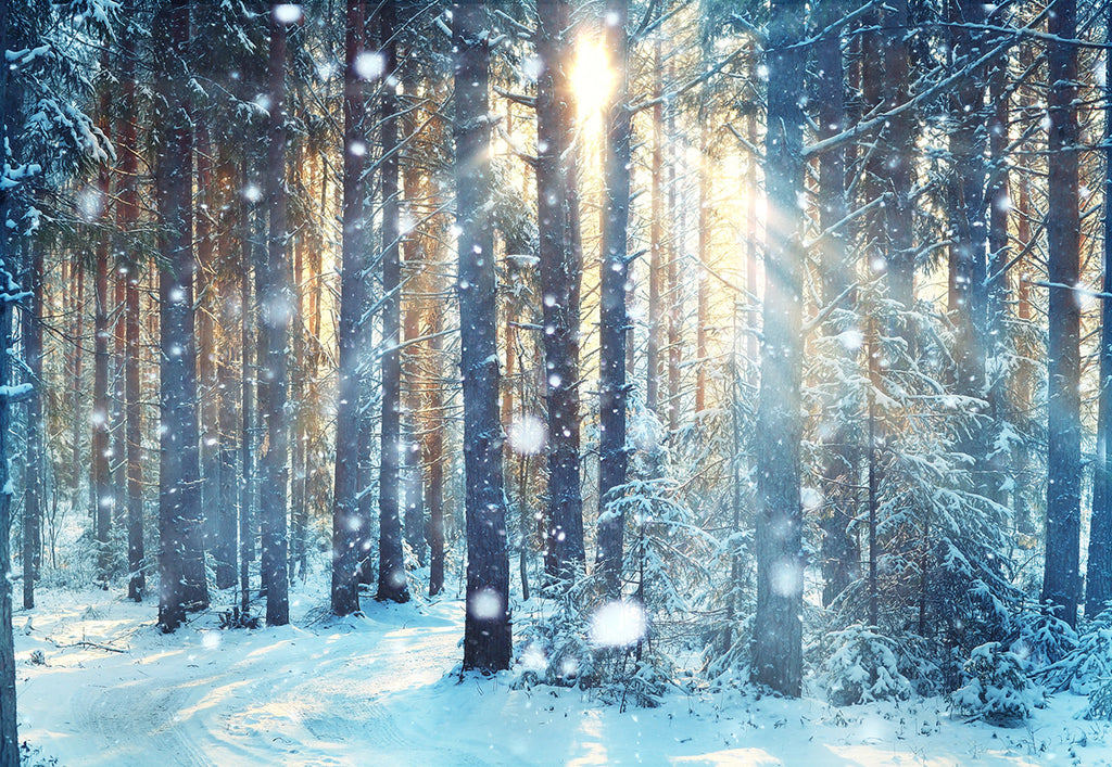 Winter Sunlight Forest Photography Backdrop Christmas Background