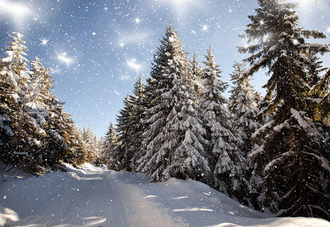 Winter Snow Cover Forest Photography Backdrop