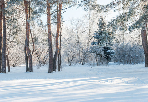 Snow Photo Winter Forest Photography Backdrop