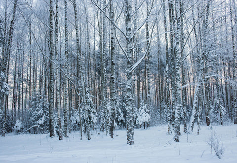 Snow Cover Forest Winter Photography Backdrop for Studio