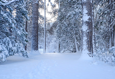 Wonderland Snow Cover Forest Photography Backdrop