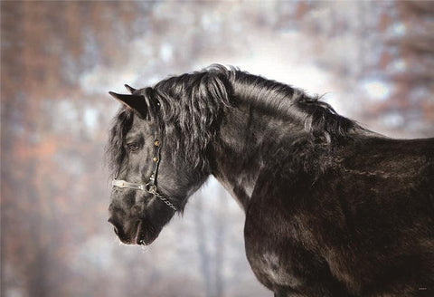 Fall Animal Horse Photography Backdrops
