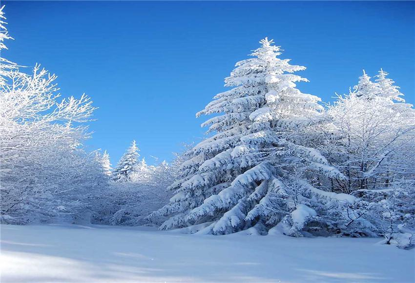 Winter Snow Forest Backdrop for Photography