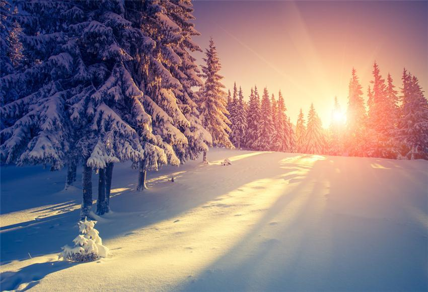 Snow Forest Sunset Photography Backdrops