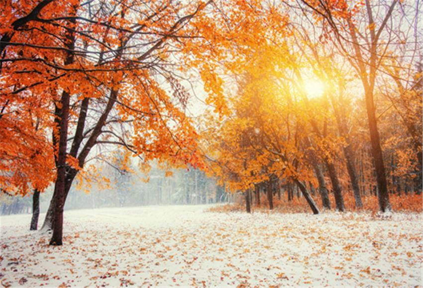 Fall Maple Snow Photography Backdrop