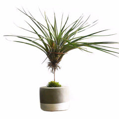 Air Plant Concrete Stand