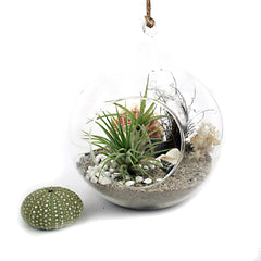 Ecobubbles Air Plants Nz Plant Gifts Plants For Home And