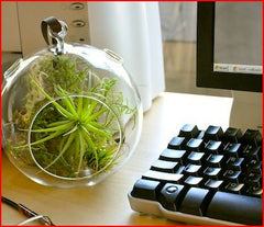 Air plant reviews