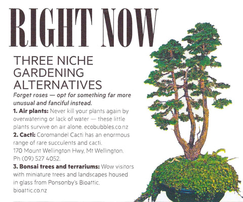 Air Trees article in Viva Magazine