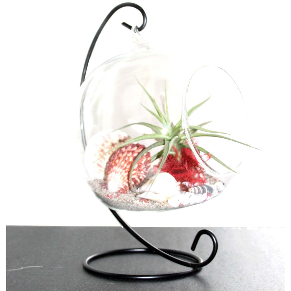 Ecobubbles ACCESSORIES Air Plant Stand