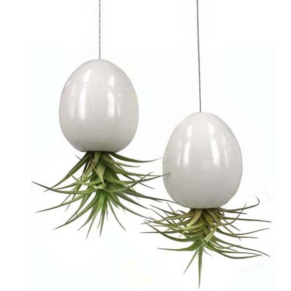 Ecobubbles AIR PLANT DISPLAYS Hanging Air Pod