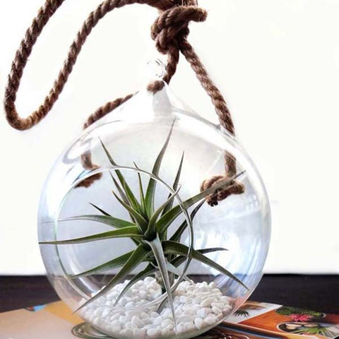 Rope Globe & Large Air Plant