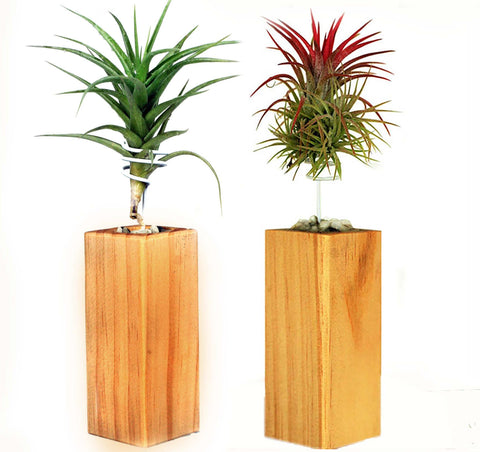 Air Trees, set of two
