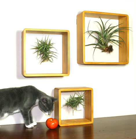 Living Wall Art Frames - Set of 3, Large, Medium, Small