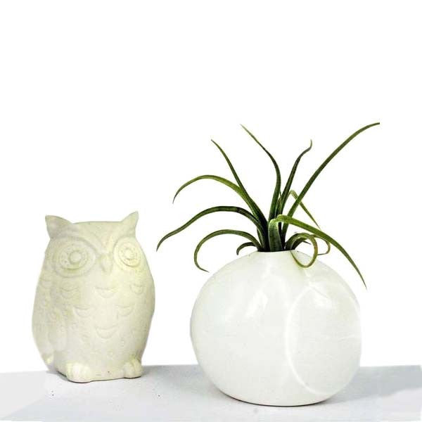 Ecobubbles AIR PLANTS Pinch Pot & Air Plant