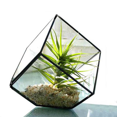 Prism Glass & Air Plant
