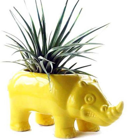Rhino Planter & Cardinal Air Plant