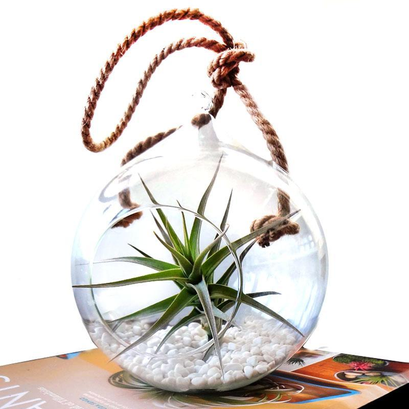 Ecobubbles AIR PLANTS Rope Globe & Large Air Plant