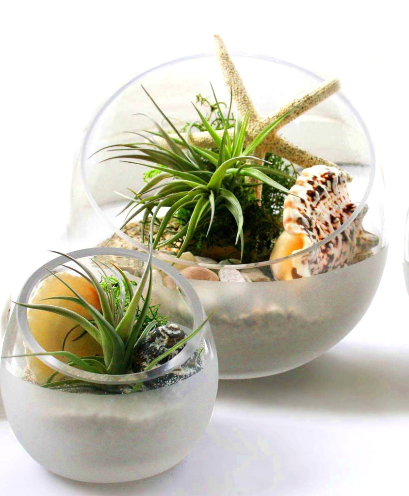 Ecobubbles AIR PLANTS Scoop Bowl Beach Trio