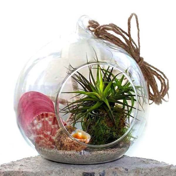 Ecobubbles AIR PLANTS Summer Air Plant Terrarium