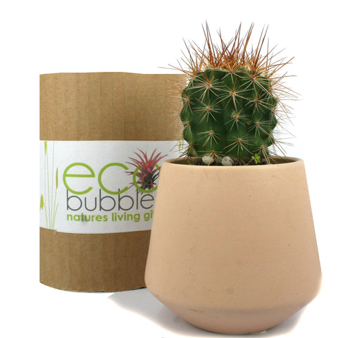 Prickle Pot