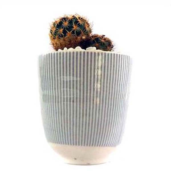 Ecobubbles SUCCULENT & CACTUS Yellow Flower & Ceramic Pot