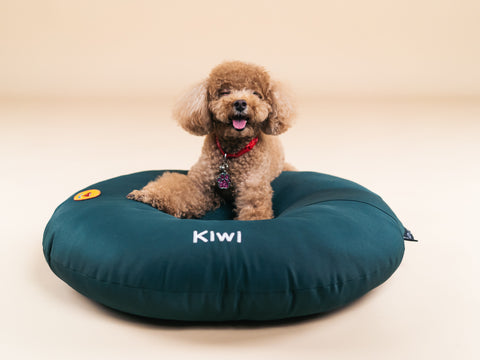Green customisable dog bed made in Singapore